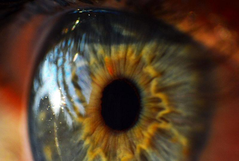 Dr's Slazus Ophthalmologists | Procedures | Corneal Procedures